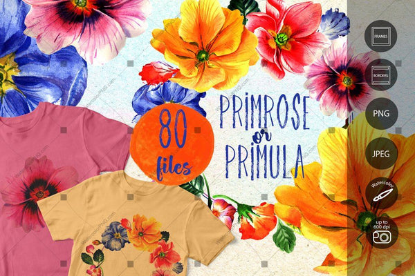 Primrose Or Primula Flowers Png Watercolor Set Digital