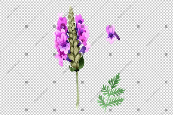 Purple And Pink Lavender Flowers Png Watercolor Flower