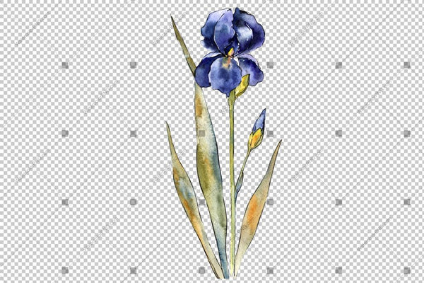 Purple And Yellow Irises Flowers Watercolor Png Flower