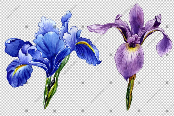 Ungu Iris Png Watercolor Flowers Flower