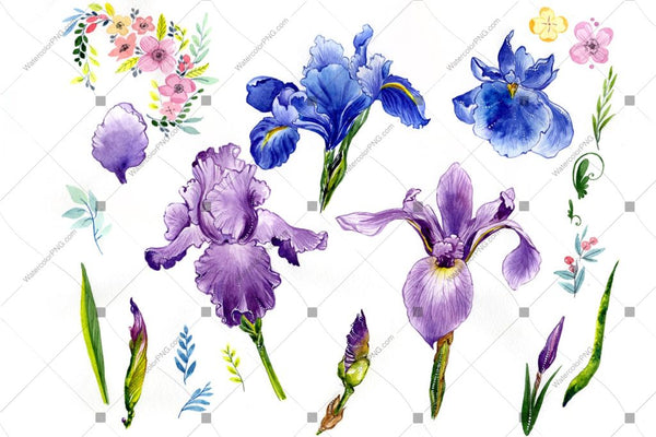 Purple Iris Png Watercolor Flowers Flower