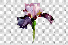 Purple Irises Flowers Png Watercolor Flower