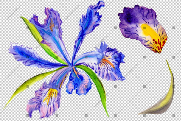 Purple Irises Watercolor Flowers Png Flower