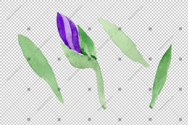 Purple Irises Watercolor Png Flowers Flower