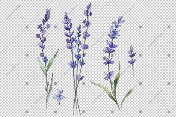 Purple Lavender Flowers Watercolor Png Flower