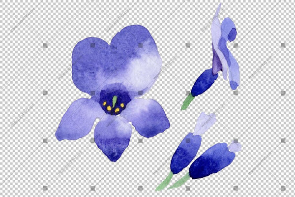 Purple Lavender Flowers Watercolor Png Macro Flower
