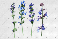Purple Lavender Png Flowers Watercolor Flower