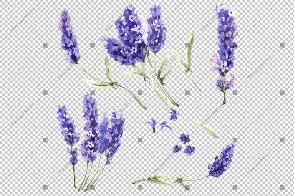 Purple Lavender Wild Flowers Watercolor Png Flower