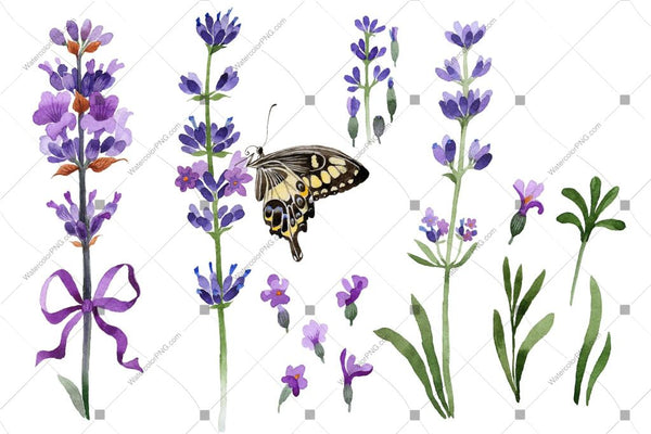 Purple Lavender With Butterfly Flowers Watercolor Png Flower