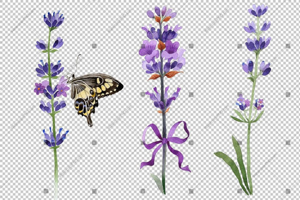 Purple Lavender Butterfly Flowers ilə Sulu boya Png Flower