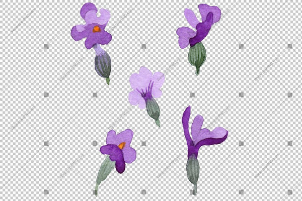Purple Lavender Butterfly Flowers Akuarela Png Lore