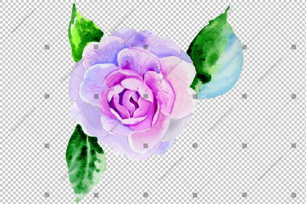 Purple Peony Camelia Watercolor Flower Png Flower