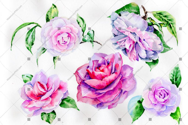 Purple Peony Camellia Watercolor Flower PNG