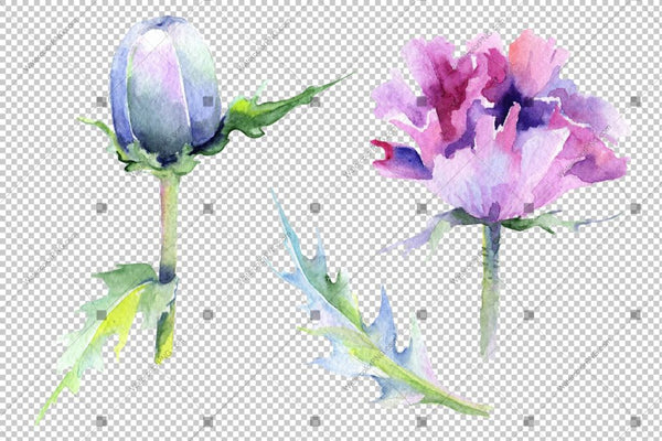Purple Poppy Watercolor Flowers Png Flower