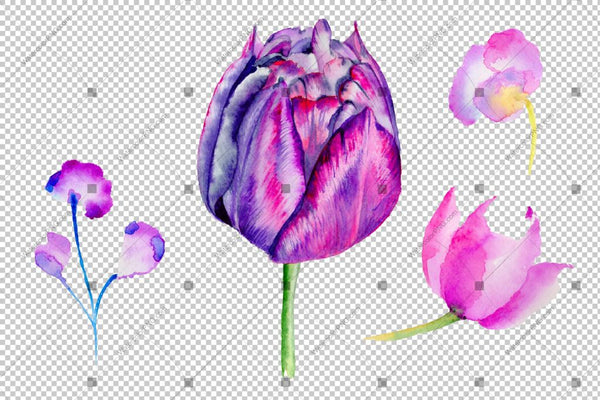 Purple Tulip Flowers Png Watercolor Flower