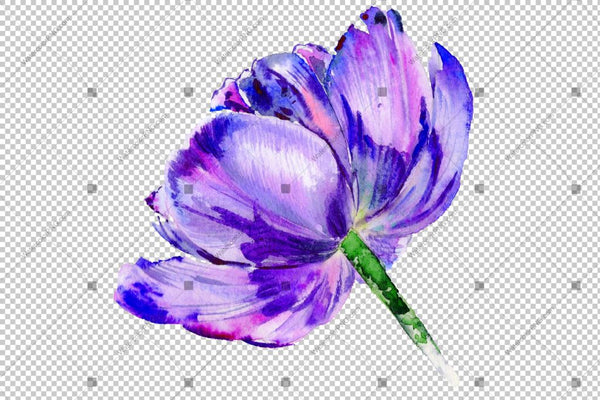 Purple Tulip Watercolor Flowers Png Flower