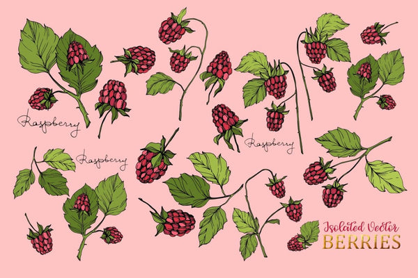 Raspberry Vector Collection Digital