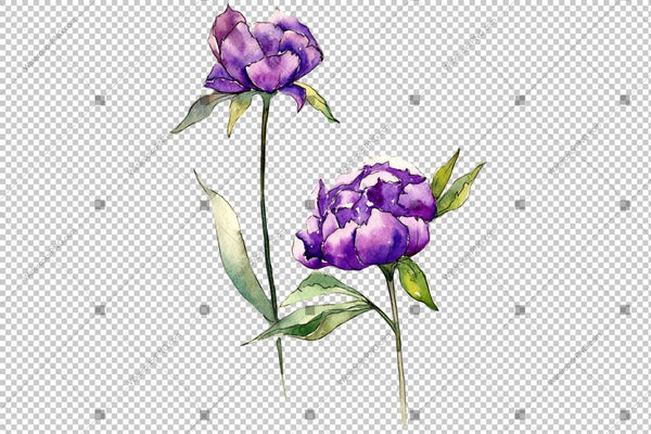 Red And Purple Peony Watercolor Flower Png Flower
