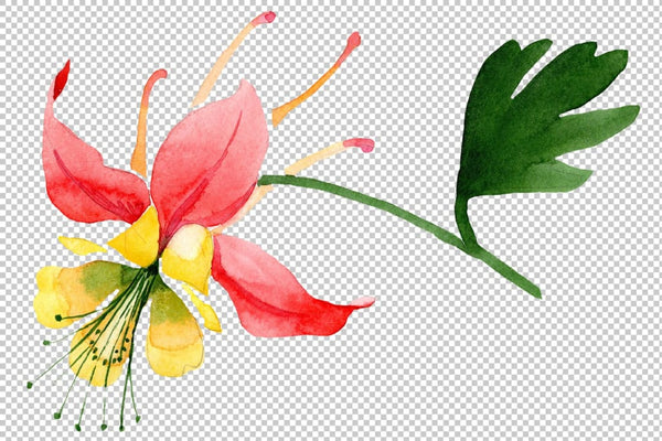 Red aquilegia flower watercolor png Flower