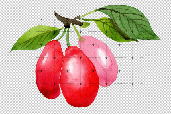 Red Dogwood Png Watercolor Plant Set Digital