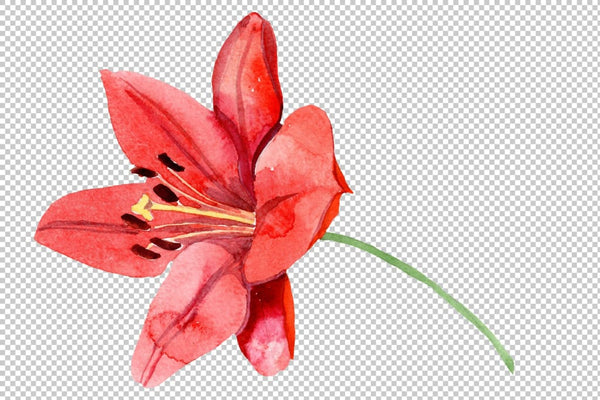 Red lily flower watercolor png Flower