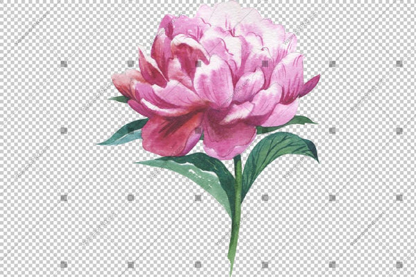 Red Peony Watercolor Flower Png Flower