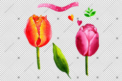 Red Pink And Yellow Tulip Flowers Watercolor Png Flower