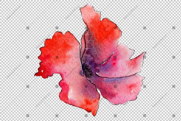 Red Poppy Colorful Watercolor Flowers Png Flower
