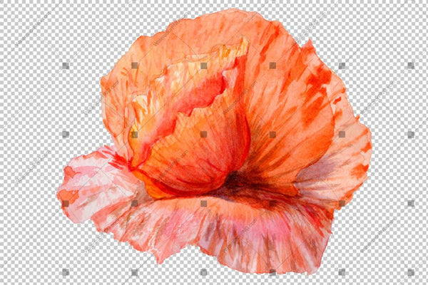 Red Poppy Flowers Colorful Watercolor Png Set Flower