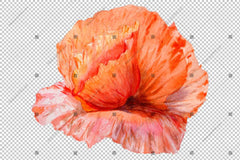 Fiore rosso del Poppy Flowers Colorful Watercolor Png Set