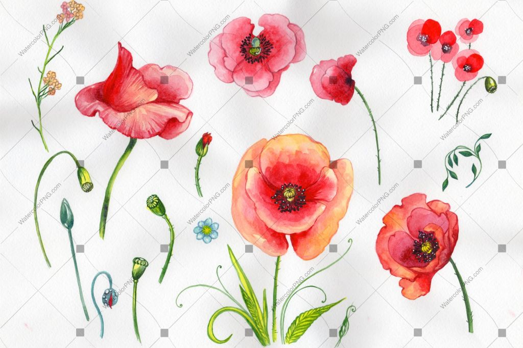 Red Poppy Flowers Watercolor Png Flower