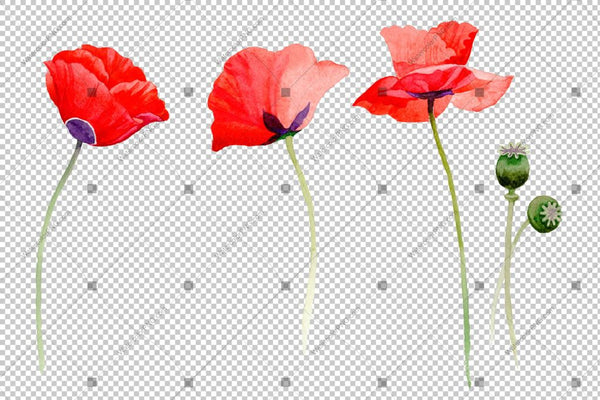 Red Poppy Flowers Watercolor Png Set Flower