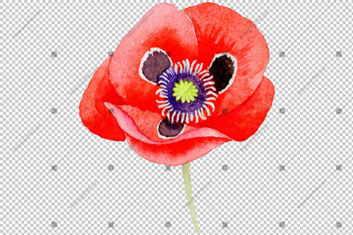 Red Poppy Flowers Akvarell Png Set Flower
