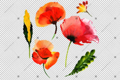 Red Poppy Set Watercolor Flowers Png Flower