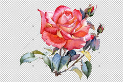 Red Rose Realistic Png Watercolor Set Flower