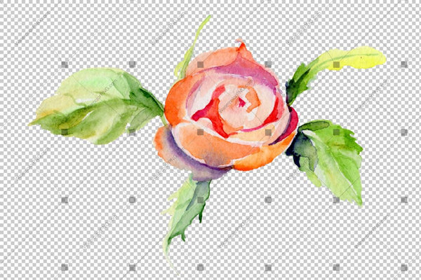 Red Rose Wildflower Med Löv I En Handdragen Vattenfärg Png Style Isolated Flower