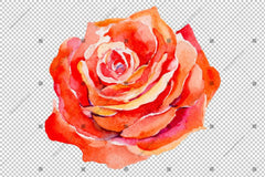 Red Rose Wildflower With Leaves In A Hand-Drawn Watercolor Png Style Flowering Isolated