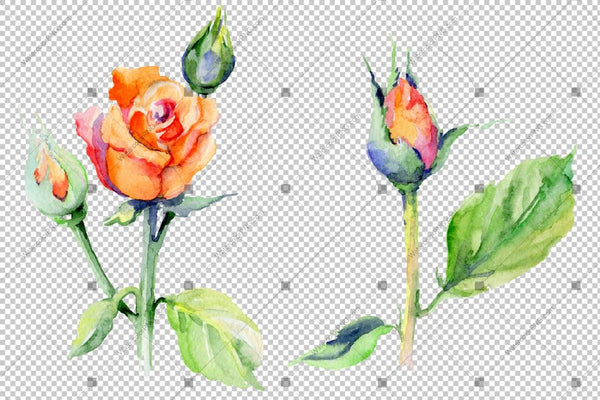 Red Rose Wildflower With Leaves In A Hand-Drawn Watercolor Png Style Isolated Flower