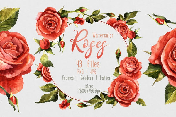 Red roses PNG watercolor flower set Flower