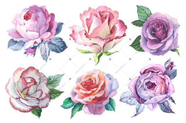 Romantic Set Of 6 Png Watercolor Roses Digital
