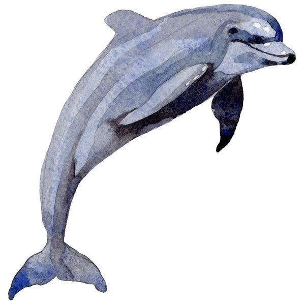 Sea Dolphins Watercolor PNG Digital