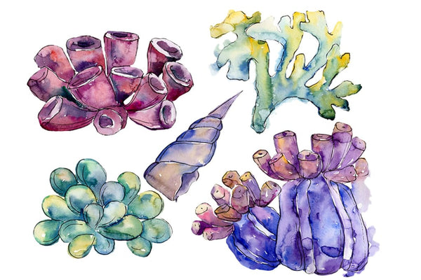 Sea flowers corals magic watercolor png Flower