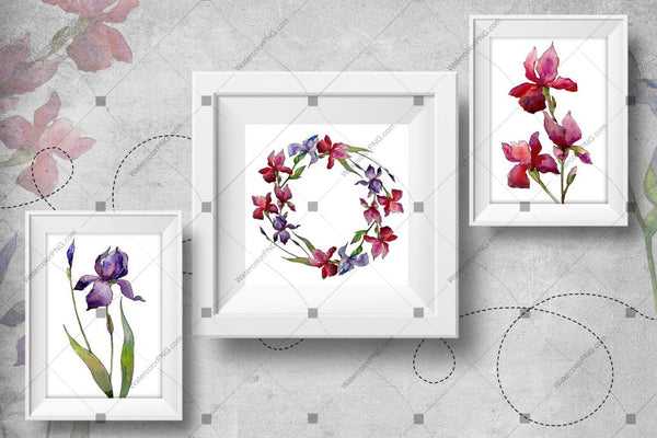 Olorful Irises Png Watercolor Set Digital