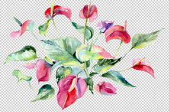 Spathiphyllum red Watercolour png Flower