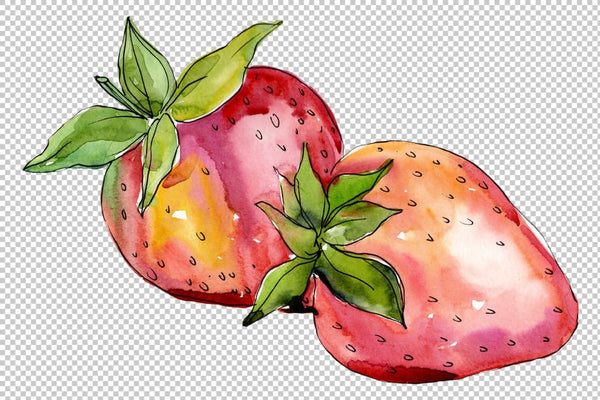 Strawberry Alba watercolor png Flower