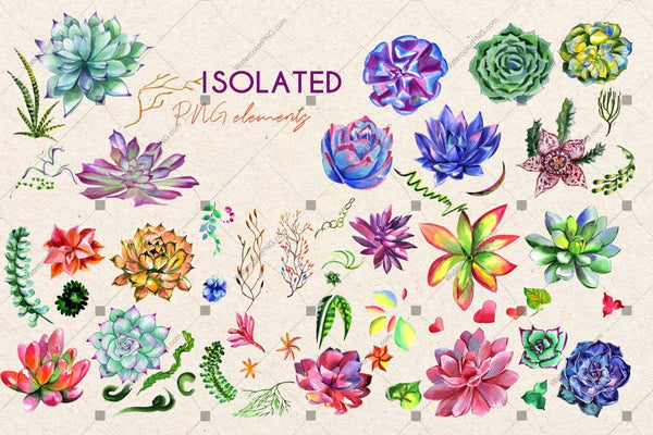 Succulent Plant Png Watercolor Set Budle