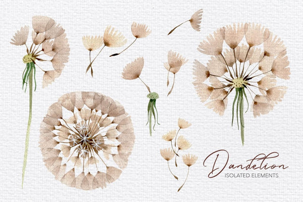 Summer dandelion collection watercolor png Digital
