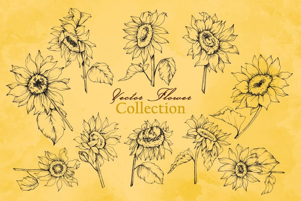 Sunflower Vector Collection Digital