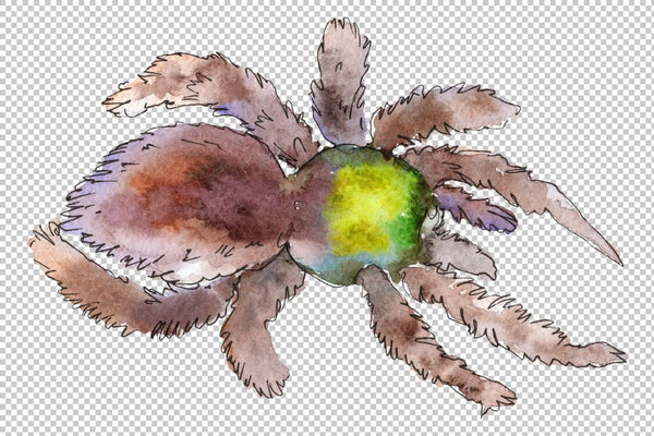 Tarantula exotic watercolor png Flower
