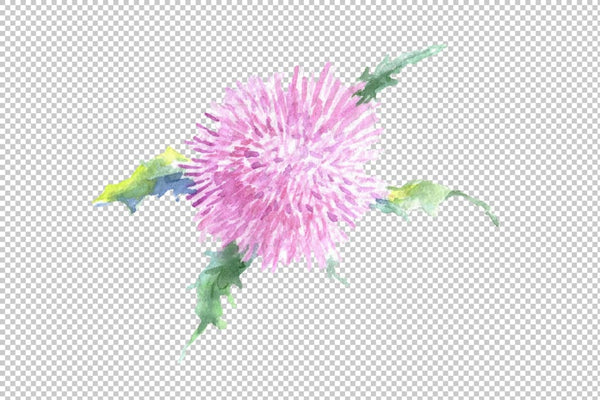 Thistle Watercolor png Flower